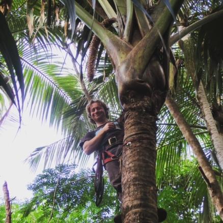CocoDeMer_climbing